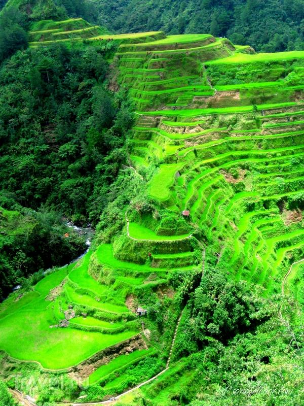 В 1995 году рисовые террасы были взяты под охрану ЮНЕСКО, Филиппины / Филиппины