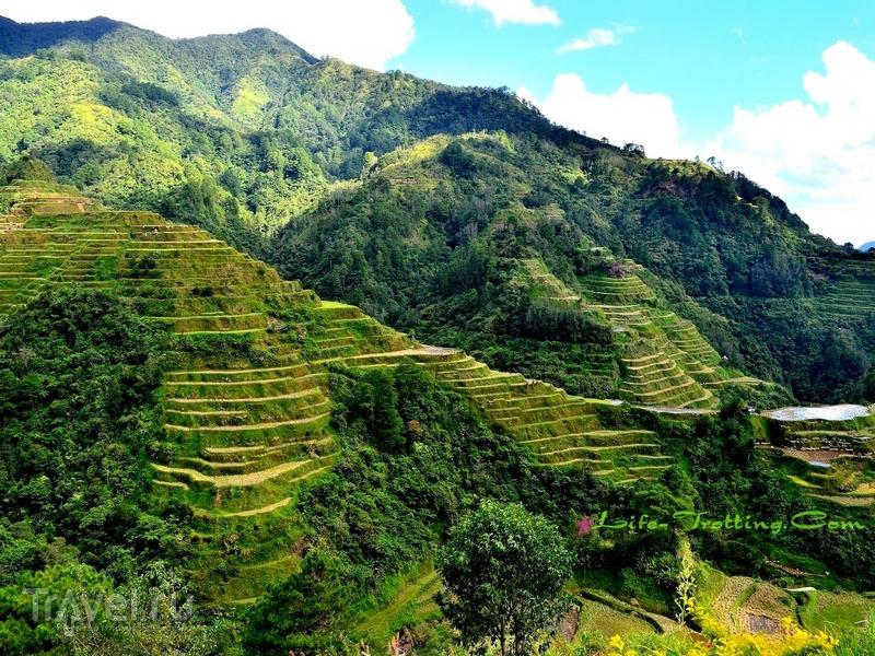 Большинство террас расположено на высоте до полутора тысяч метров над уровнем моря / Филиппины