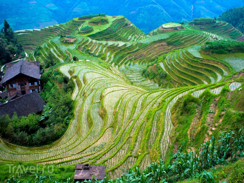 Считается, что террасы были построены вручную, без использования специального оборудования / Филиппины