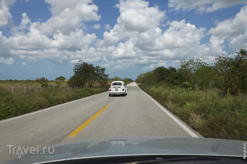 Поездки из Канкуна. Рио-Лагартос / Фото из Мексики