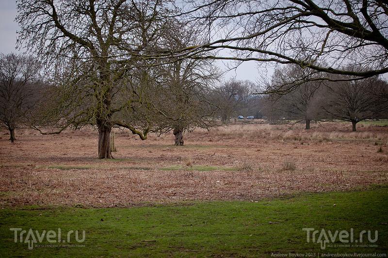 Лондон 2013 / Фото из Великобритании
