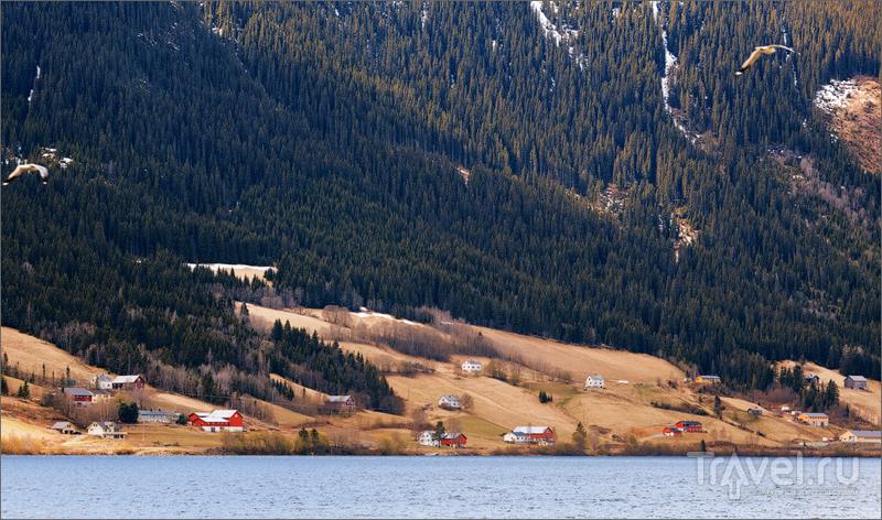 По дорогам Норвегии / Фото из Норвегии
