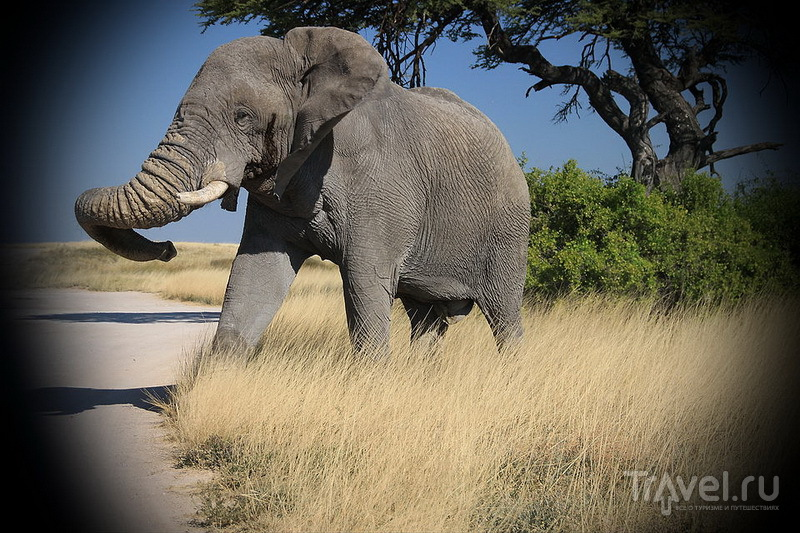 Сафари по-южноафрикански: Намибия или Ботсвана? / Ботсвана