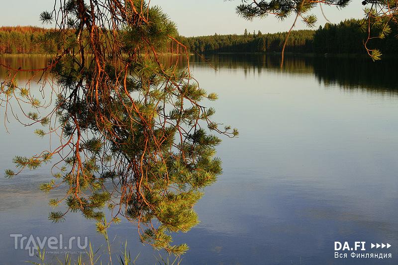 В национальном парке Реповеси, Финляндия / Фото из Финляндии