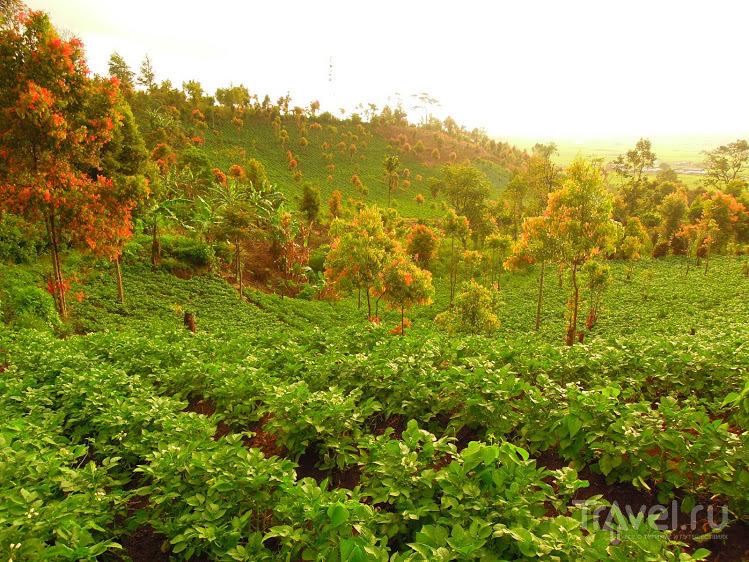 Западная Суматра / Индонезия