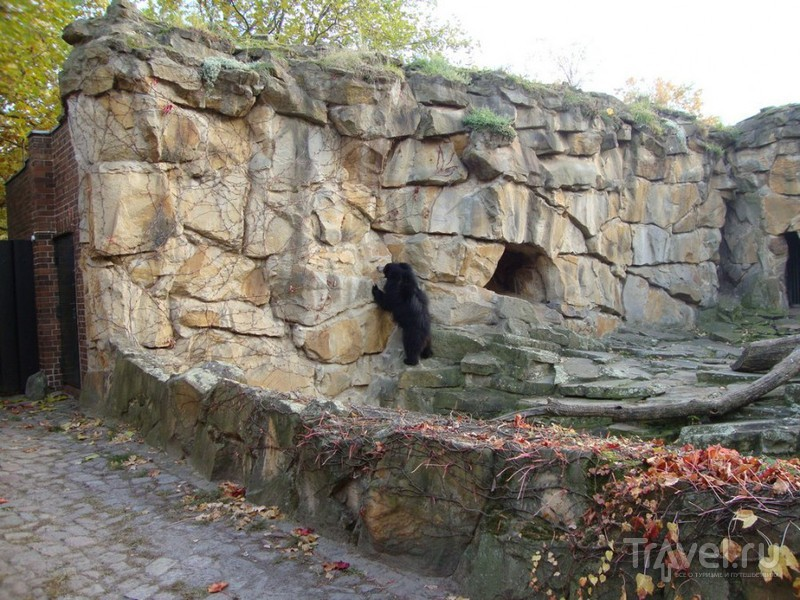 Берлинский зоопарк / Германия