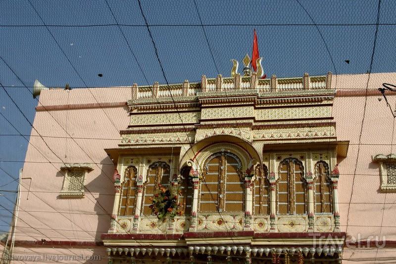 Храм крыс Шри Карни Мата в Дешноке / Индия