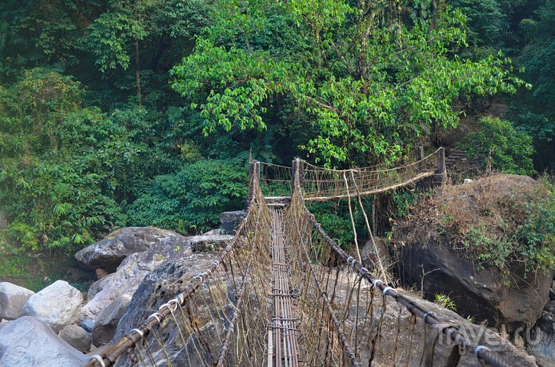 Живые мосты Черапунджи / Фото из Индии