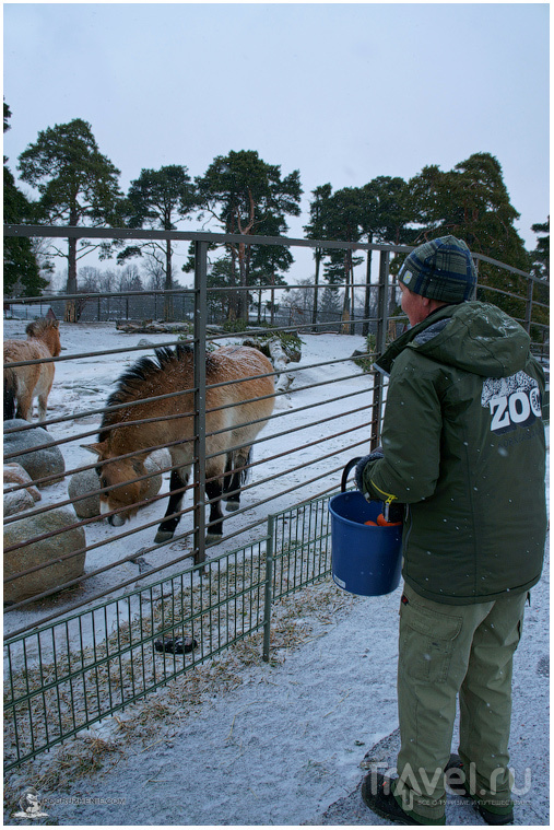 Финское царство зверей
