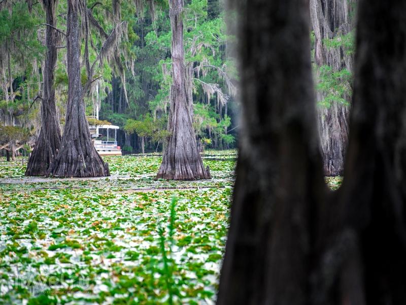 Каддо напоминает естественный лабиринт, тянущийся меж вечнозеленых кипарисов, США / США