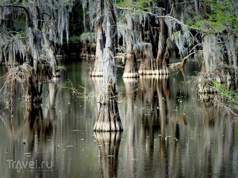 Озеро Каддо расположено на границе штатов Техас и Луизиана, США / США