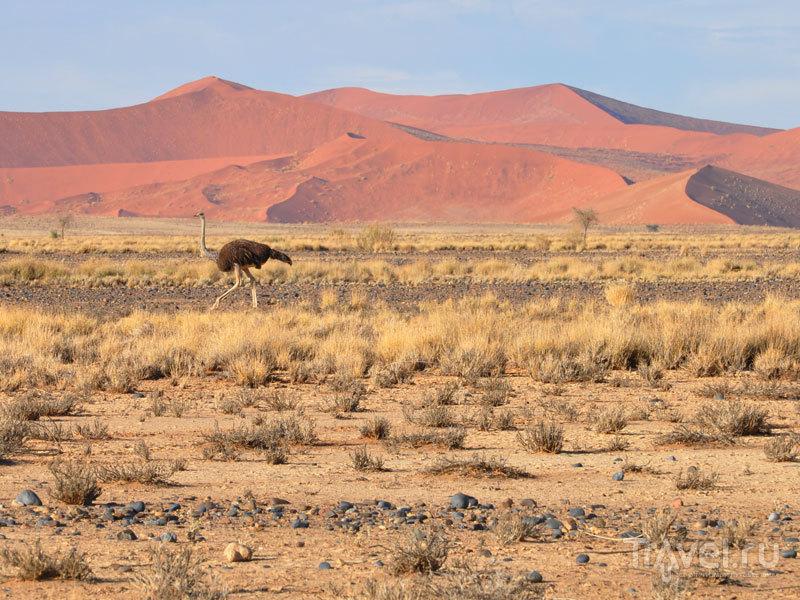 В Намибии / Фото из Намибии