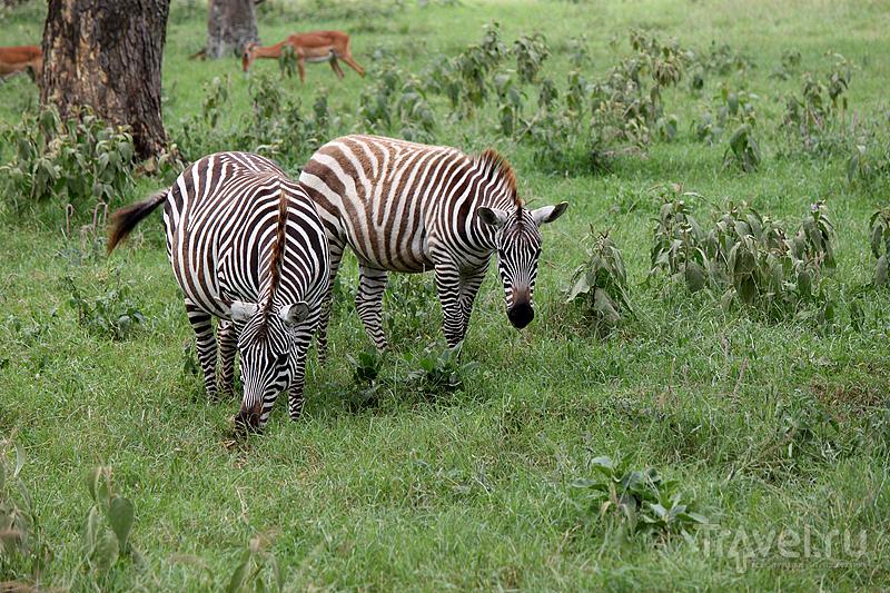 Кения: экватор и озеро Накуру / Кения