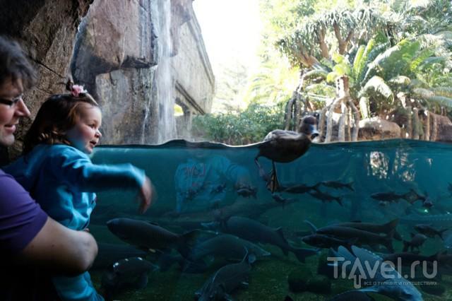 Детское развлекалово на Коста-дель-Соль / Испания