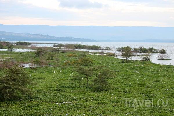 Кения: озеро Найваша и Масаи-Мара / Кения