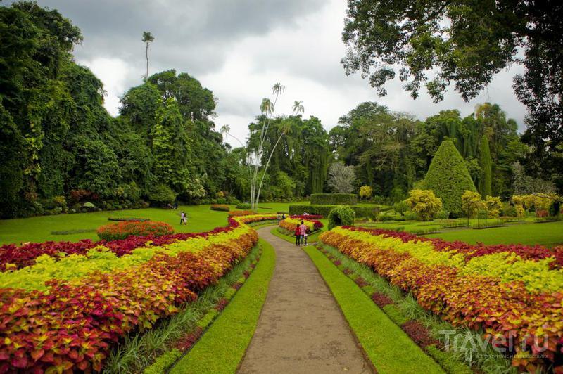 Королевский ботанический сад в Перадении, Шри-Ланка / Фото со Шри-Ланки