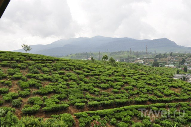Шри-Ланка. Нувара Элия / Шри-Ланка
