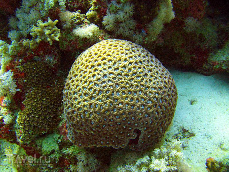 Красное море. Коралы / Фото из Египта