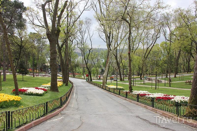 Тюльпаны в парке Эмигран / Турция