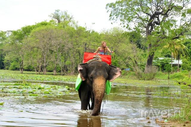 Шри-Ланка. Раджа / Шри-Ланка