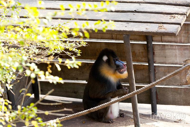 Зоопарк в Барселоне / Испания