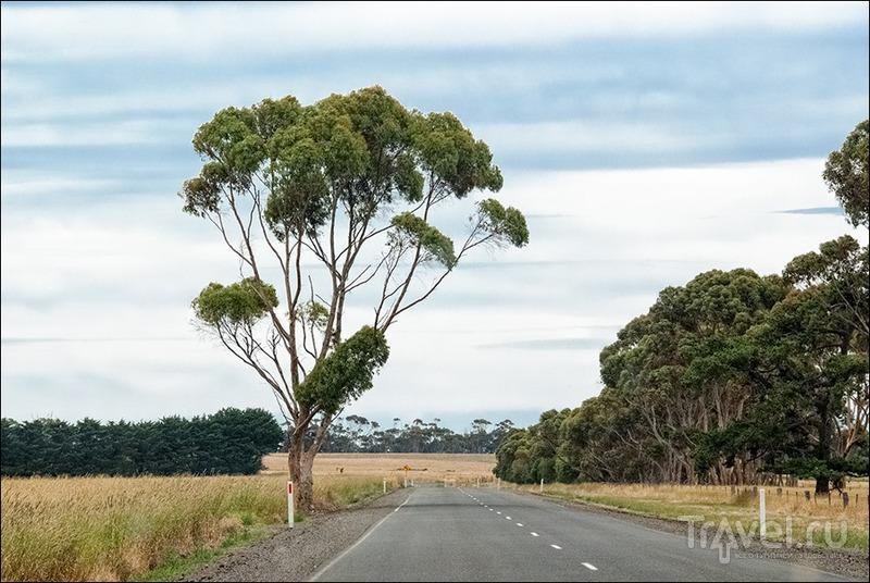 Австралийские дороги, сельская местность и дорожные знаки