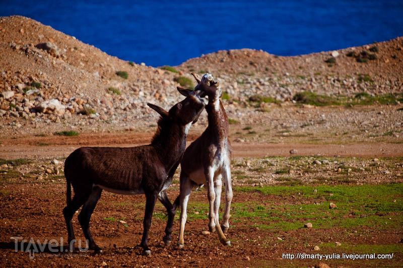 Северный Кипр: ослики!