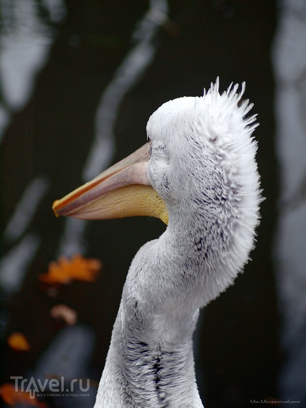 Зоопарк Шенбрунн / Фото из Австрии