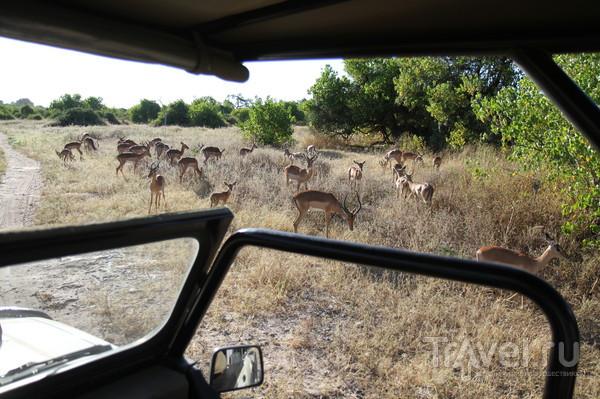 Ботсвана. Замбия. Чобе / Ботсвана