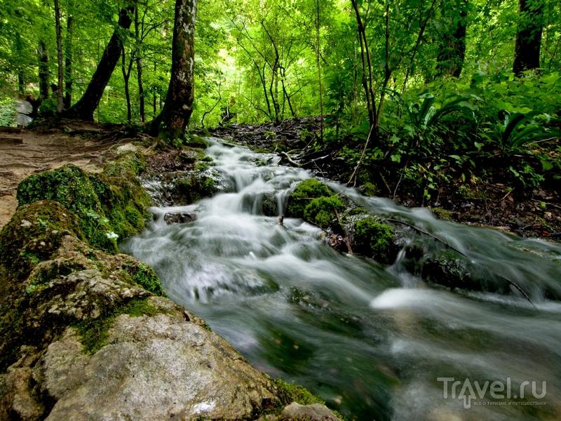 В заповеднике можно встретить косуль, лесных котов и понаблюдать за редкими видами птиц, Хорватия / Хорватия