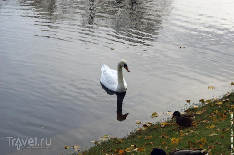 Красивый осенний Петербург (октябрь 2012) / Фото из России