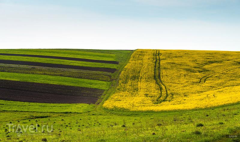 Весна в Карпатах / Фото с Украины