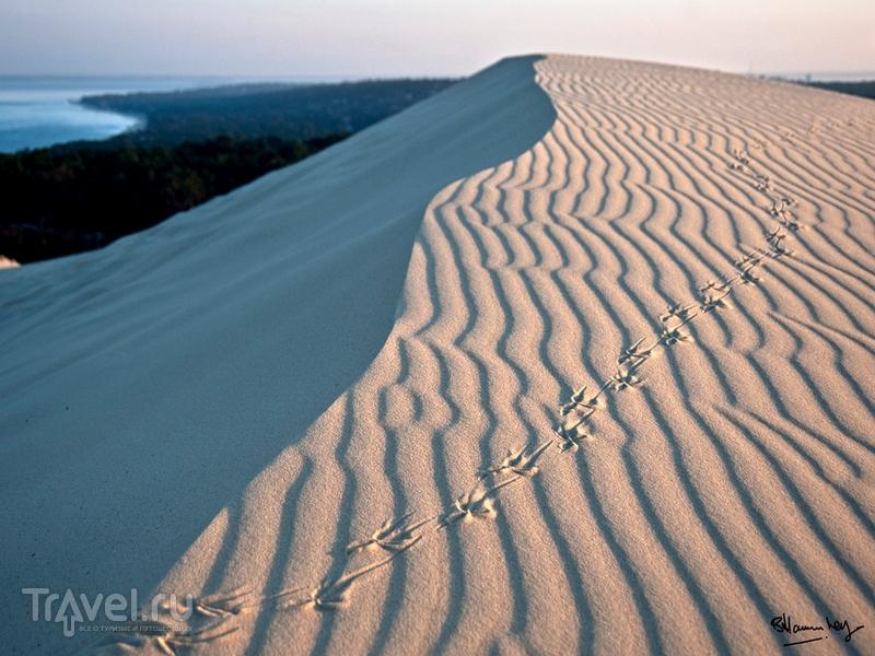 Дюна Пила высотой 108 метров простирается вдоль побережья более чем на три километра / Франция
