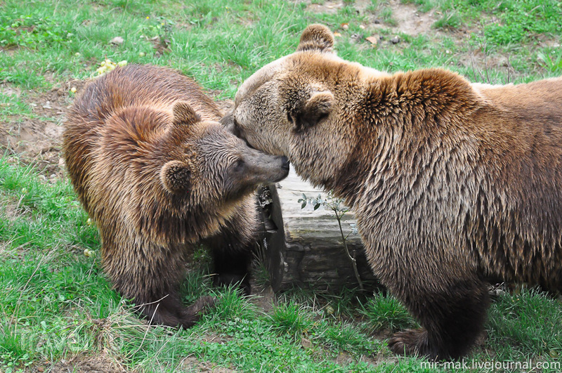 Берн и медведи / Фото из Швейцарии