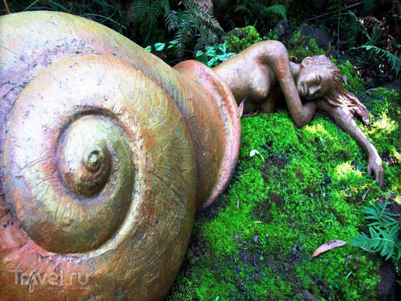 Австралийский сад скульптур Бруно Торфса напоминает волшебный мир в таинственном лесу / Австралия