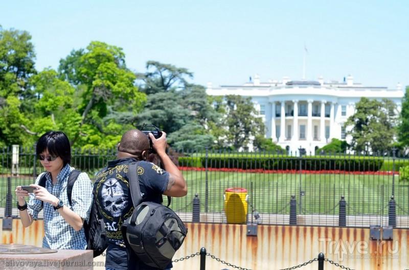 Белый дом в Вашингтоне, США / Фото из США