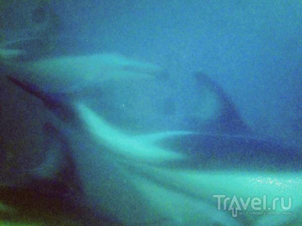 Плавать в стае дельфинов в ЮАР! / ЮАР