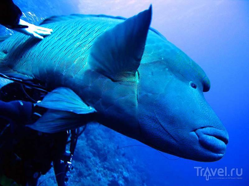 Красоты Красного моря. Рыбы / Египет
