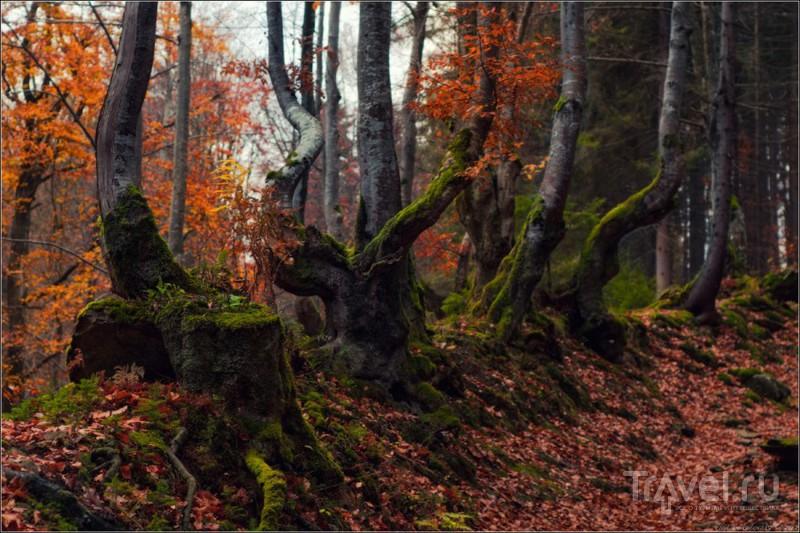 Фрагменты осеннего леса / Украина