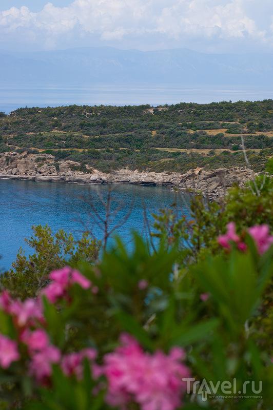 На острове Спецес, Греция / Фото из Греции