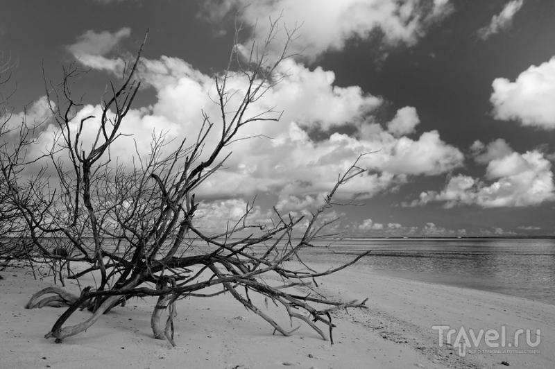 Сейшелы или история о том, как мы посетили рай / Фото с Сейшел