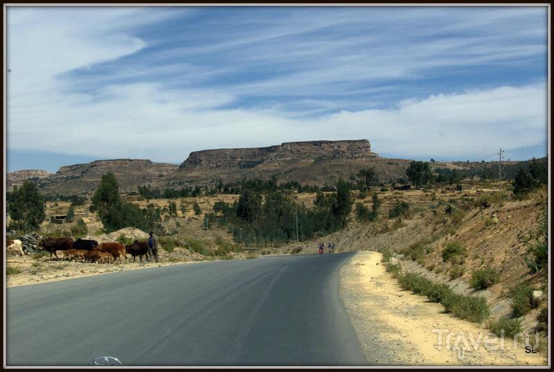 В провинции Тиграй, Эфиопия / Фото из Эфиопии
