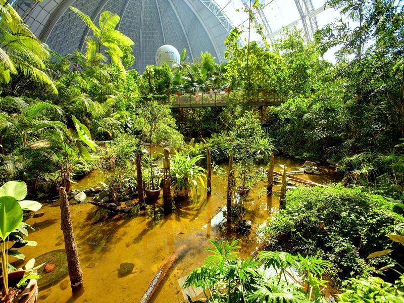 """В """"Цветочном мире"""" находятся нстоящие тропические заросли с орхидеями и пальмами / Германия"""