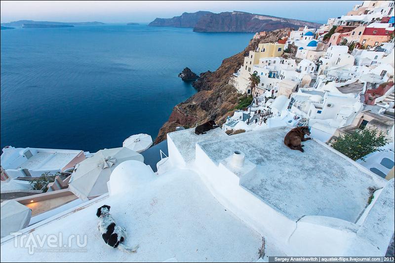 Все собаки попадают в рай. Утро на Санторине / Фото из Греции