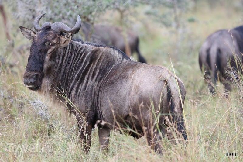 В мире животных / Фото из Танзании