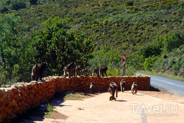 Животный мир Кейптауна / ЮАР