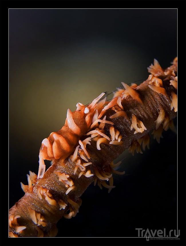 Необычные обитатели северного Сулавеси. Истории черного песка / Фото из Индонезии