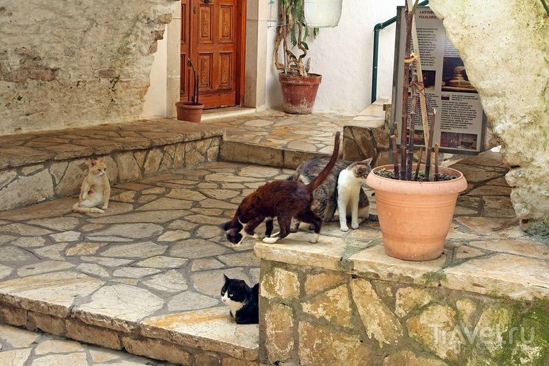Знакомство с Палеокастрицей / Греция