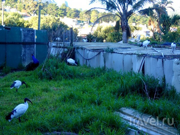 Мир птиц в ЮАР / ЮАР