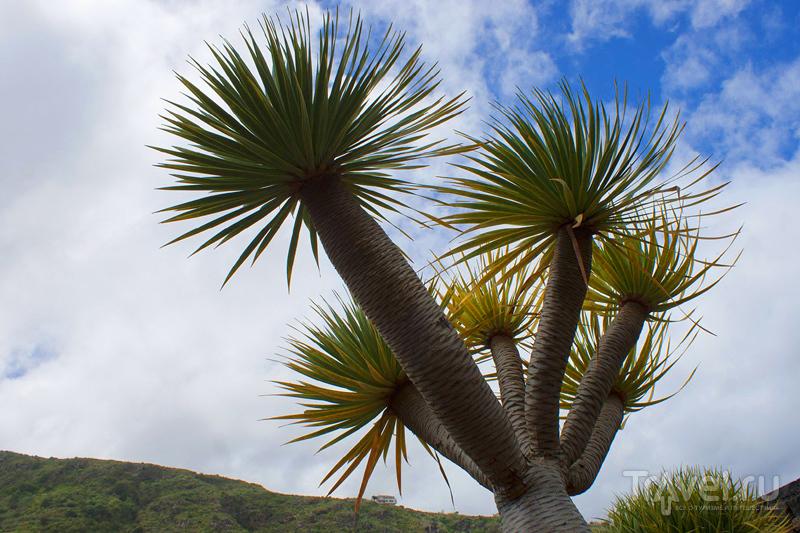 На острове Тенерифе, Канарские острова, Испания / Фото из Испании